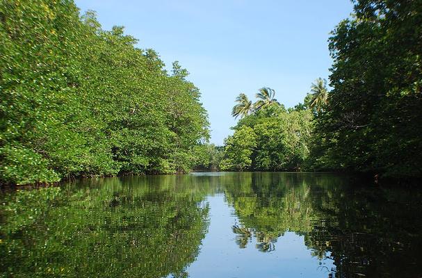 沙邦红树林旅游图片