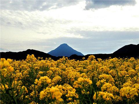 鹿儿岛旅游图片