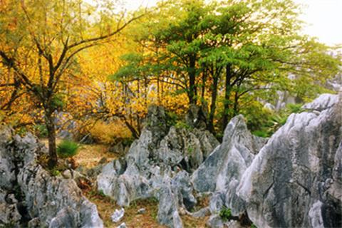 千岛湖石林
