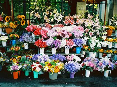 忻州美美鲜花店旅游景点图片