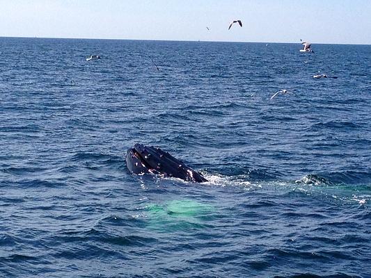 观鲸鱼旅游图片