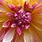 sunflower53