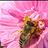 最后的蔷微花