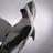 马骏-Shark