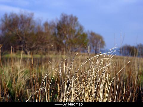 黄草梁风景区旅游景点图片