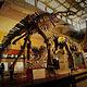 上海自然博物馆(静安新馆)
