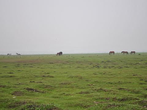 丰宁坝上旅游景点图片
