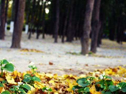 地坛公园旅游景点图片