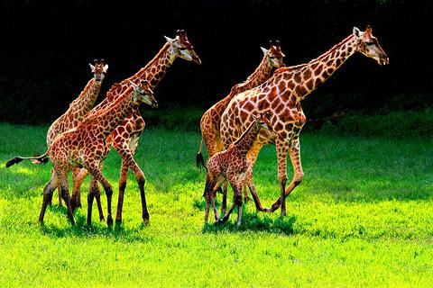 重庆野生动物世界
