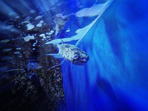 大连圣亚海洋世界旅游景点图片