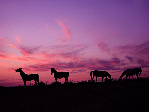 喀纳斯旅游景点图片