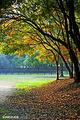 共青国家森林公园