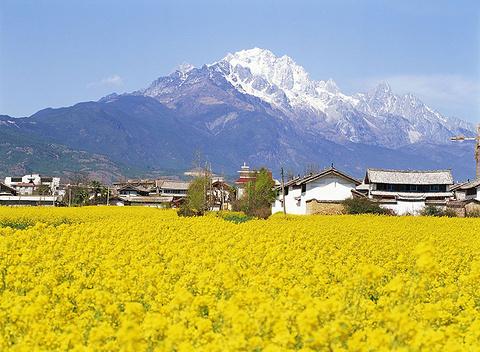 玉龙雪山的图片
