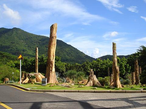 仙湖植物园旅游景点图片